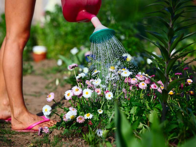 3 formas de regar suas plantas